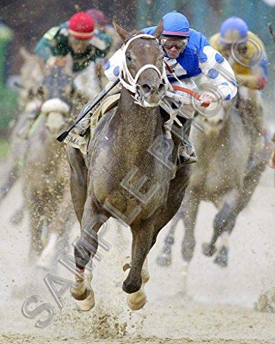 Smarty Jones 2004 Kentucky Derby Preakness Stakes Winner 8x10 Photo (Kentucky Derby Picture)