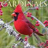 Cardinals 2022 Wall Calendar (Birds)