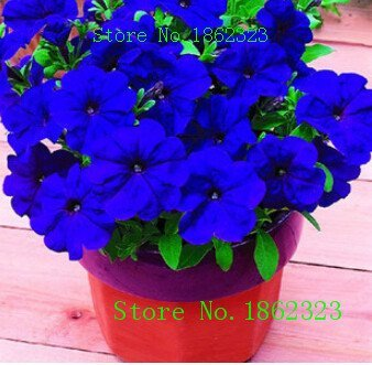 Hot!20 Colors Petunia seeds, potted seed, Petunia flower seed Garden plants, perennial planting - 200 seeds ()