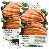 buy Seed Needs, Atlantic Giant Pumpkin (Cucurbita maxima) Twin Pack 10 Seeds Each NON-GMO now, new 2019-2018 bestseller, review and Photo, best price $9.45