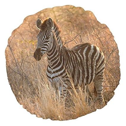 Amazon.com: Zebra Foal In Morning Light Mini Round Pillows for ...