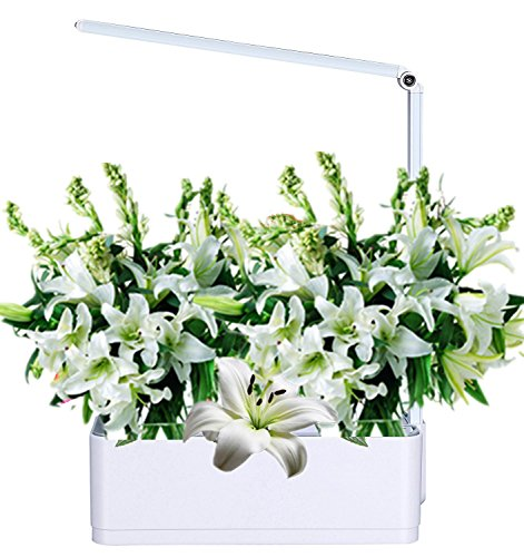 Smart Hydroponics Indoor Herb Garden Growing System LED Plant Grow Mini Kit with Self-Watering Pots, Planting Light & Desk Lamp Review
