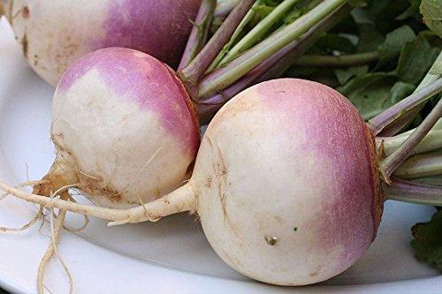 Purple Turnips Top - 1LB Purple Top Turnip Deer Food Plot Seeds