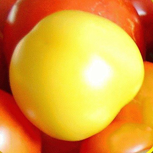 Garden Peach Heirloom Tomato Seeds - Gold Vault Jumbo Seed Packet (Peach Tomato)