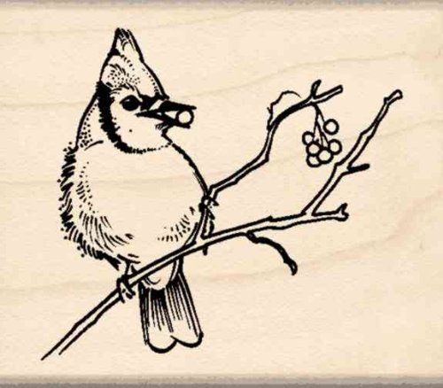 Blue Jay Rubber Stamp - 1-3/4 inches x 2 inches