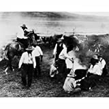 Quality digital print of a vintage photograph - Branding Cattle. Black & White 8x10 inches - Luster Finish