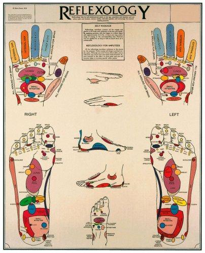 Reflexology Chart Anatomical Chart Company EE1L