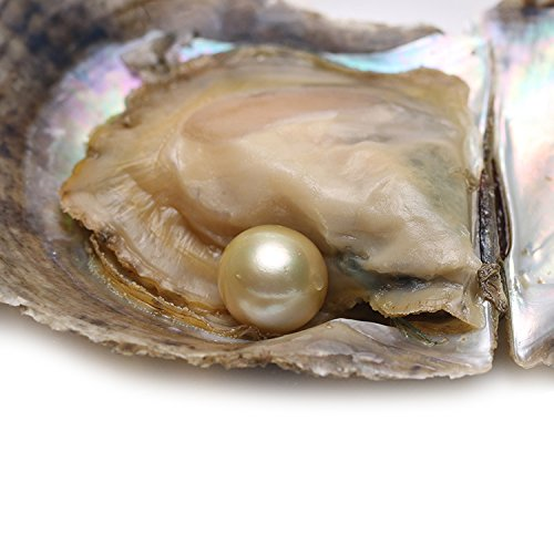 Sea Saltwater Pearls (HENGSHENG 1 Piece Saltwater Round Pearl Oyster 9-10 mm South Sea Gold Color Pearl Inside as Wish)