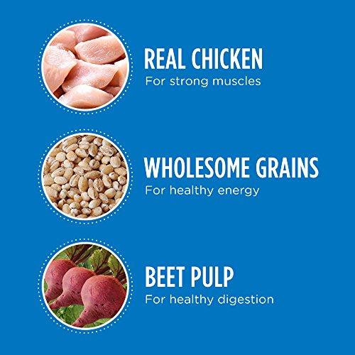 Dog Food Science Diet Vs Iams