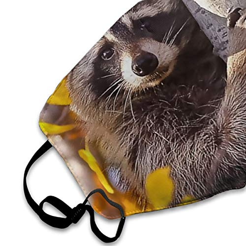 SARA NELL Face Mask Raccoon Autumn Mask Mouth Mask Anti-Dust Mask Adjustable Earloop Face Mask