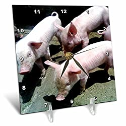 3dRose 3 Baby Pigs - Desk Clock, 6 by 6-Inch (dc_50176_1)