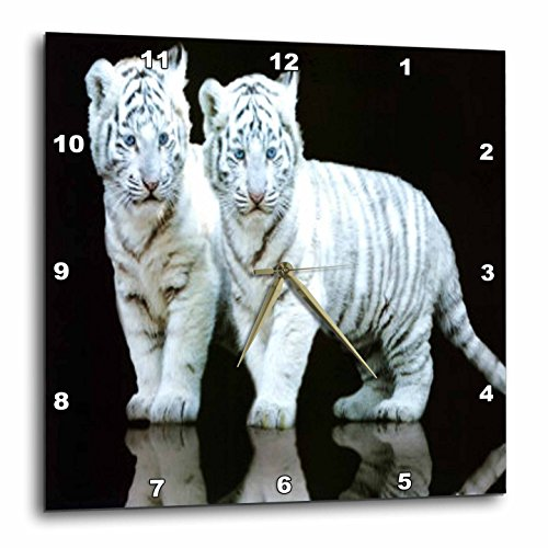 Tigers Wall Clock - 3dRose White Tiger Cubs - Wall Clock, 10 by 10-Inch (dpp_80218_1)