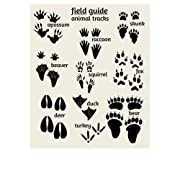 Alley Kids Woodland Animal Tracks Poster, Field Guide Series, Woodland Nursery (11x14)