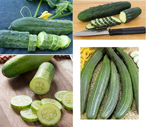 David's Garden Seeds Collection Set Cucumber Slicing MD6564 (Green) 4 Varieties 200 Seeds (Non-GMO, Open Pollinated, Organic, Heirloom)