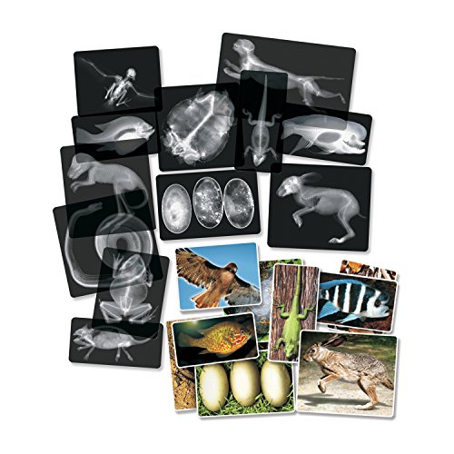 Roylco R-5910 Animal X-Ray Set, 14/Package Grade Kindergarten to 1, 0.38