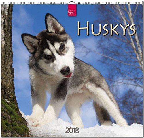 HUSKYS: Original Stürtz-Kalender 2018 - Mittelformat-Kalender 33 x 31 cm