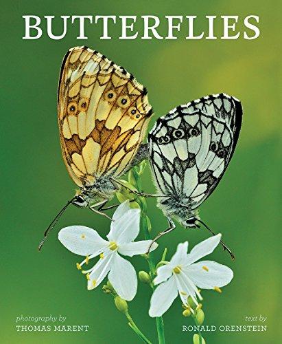 Book Cover: Butterflies