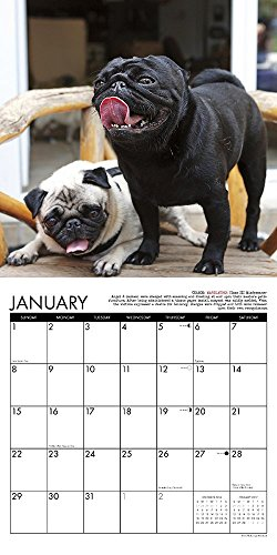2017-Pug-Mugs-Mini-Wall-Calendar