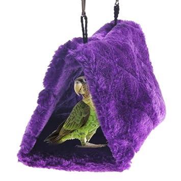 Sun Conure Verde mejilla Bird Parrot caliente hamaca cobertizo caseta nido (morado): Amazon.es: Jardín