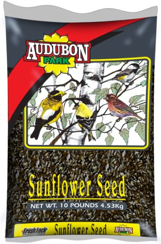 Black Oil Sunflower Seed Bird Food