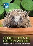 Secret Lives of Garden Wildlife (RSPB)