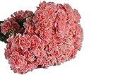 Farm2Door Wholesale Carnations: 100 Stems of Pink Mini Carnations from Colombia - Farm Direct Wholesale Fresh Flowers