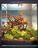 Dennerle Ludwigia Cube 30 Liter - Pflanzenlandschaft für einen 30 Liter Nano Cube