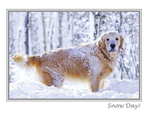 Snow Day! - Golden Retriever Christmas Cards