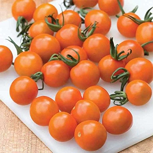 Orange Sweet Tomatoes - Orange Paruche Hybrid Cherry Tomato Seeds - succulent, sweet and flavorful fruit(50 - Seeds)