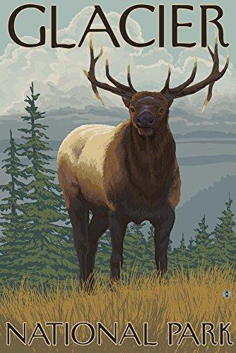 Glacier National Park, Mt - Elk Gallery Quality Metal Art