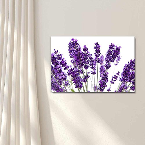 Macro View of Lavender over White Background Beautiful Floral Flower Photograph Wall Decor
