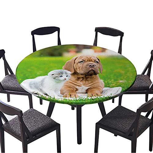 Round Tablecloths Bordeaux Puppy Dog Lying with Small Kitten on Green Grass or Everyday Dinner, Parties 50