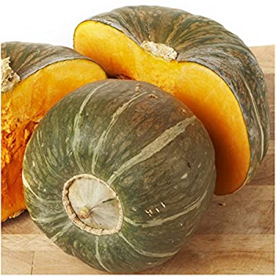 Package of 45 Seeds, Burgess Buttercup Winter Squash (Cucurbita pepo) Non-GMO Seeds by Seed Needs