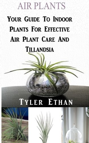 Air Plants: Your Guide To Indoor Plants  - Air Guide Shopping Results