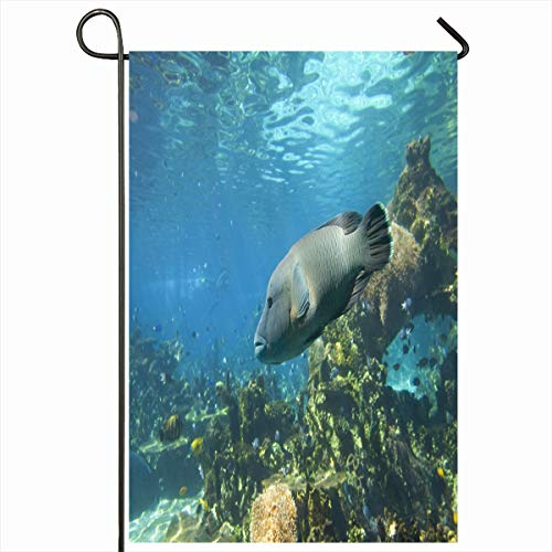 Ahawoso Seasonal Garden Flag 12x18 Inches Barrier Aquatic Hump Headed Maori Wrasse Great Reef Aquarium Nature Atoll Cheilinus Fish Design Home Decorative Outdoor Double Sided House Yard Sign