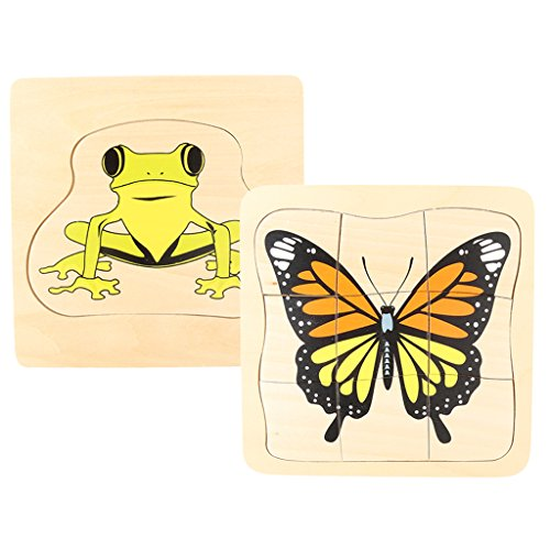 Jili Online The Evolution of Frog/Butterfly Brain Teaser Montessori Material Wooden Toys Kids Prechool Learning ()