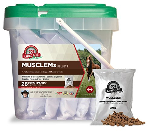 Formula 707 Musclemx Equine Supplement, Daily Fresh Packs, 28 Day Supply - Conditioning Support and Muscle Builder for Horses with Lysine, Gamma Oryzanol, Creatine & OKG (Best Muscle Building Supplements For Horses)
