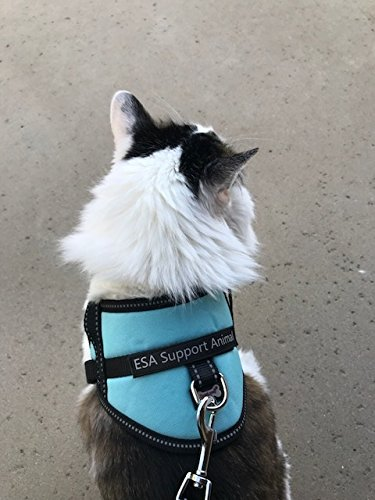 Register My Service Animal, LLC Emotional Support Animal Harness & Matching Leash Set For Small & Teacup Dogs | Three Fun Patches | Four Colors | Three sizes: 11'' - 19'' Girth by Register My Service Animal, LLC (Image #2)