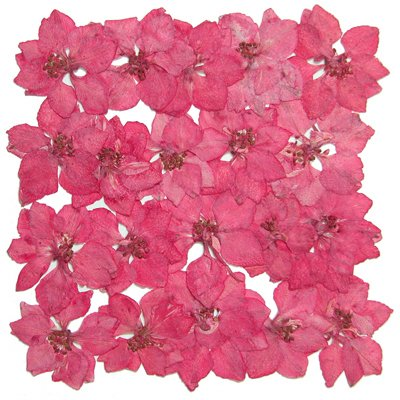Pressed Flower Card - Silver J Pressed flower, natural dried pink larkspur 20pcs. Wedding confetti, greeting card making