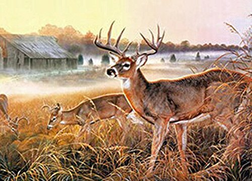 DEER UNFRAMED Holographic Wall Art-POSTERS That FLIP and CHANGE images-Lenticular Technology Artwork--MULTIPLE PICTURES IN ONE--HOLOGRAM Images Change--Technology by THOSE FLIPPING PICTURES by Those Flipping Pictures
