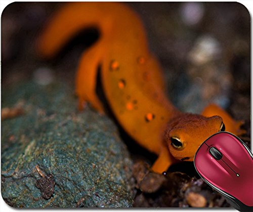 Liili Mousepad New England red eft crawling across the forest floor 28367947 (Floor England Rug)