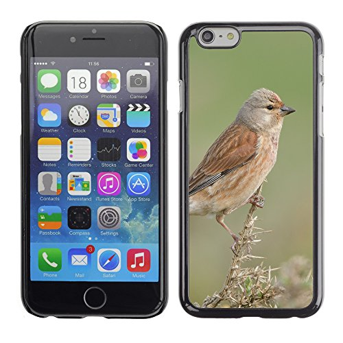 """Premio Sottile Slim Cassa Custodia Case Cover Shell // F00015340 oiseau de chanson // Apple iPhone 6 6S 6G 4.7"""""""