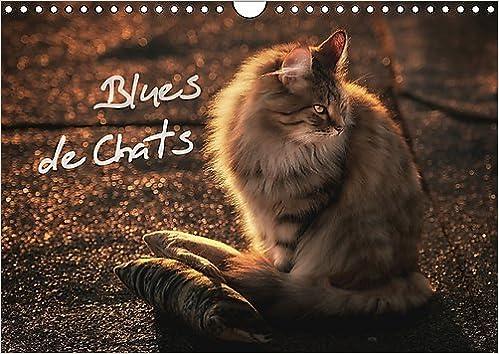 Amazon Blues De Chats 2017 Des Chats Eleves Avec Le Blues Dans Le Sang Calvendo Animaux Gross Viktor Cats