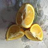 5 Sour Orange Seeds Citrus Tastes Like A Very Tangy Bitter Sweet Orange