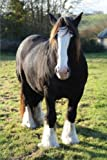 The Shire Horse Journal: 150 page lined notebook/diary