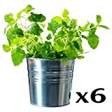 Ikea Socker, Galvanized Steel Flower Plant Pot Set of 6