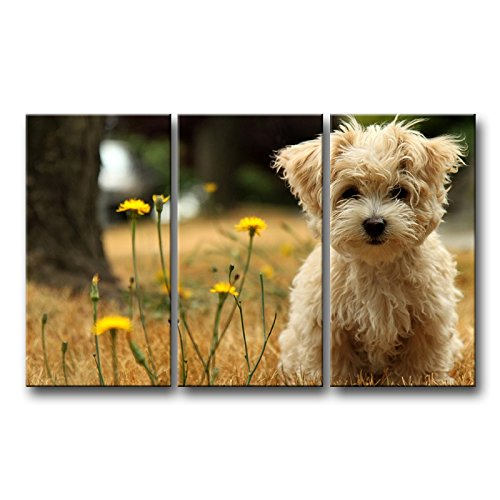 Original Dog Pop Art - So Crazy Art 3 Piece Wall Art Painting Havanese Silk Dog With Yellow Flowers Pictures Prints On Canvas Animal The Picture Decor Oil For Home Modern Decoration Print
