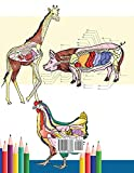Veterinary Anatomy Coloring Book: Animals