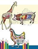 Veterinary Anatomy Coloring Book: Animals