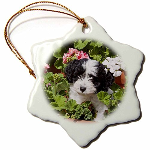 pansy 3-Inch Porcelain Snowflake Decorative Hanging Ornament, A Havanese Puppy Dog-Us Zmu-Zandria Muench Beraldo